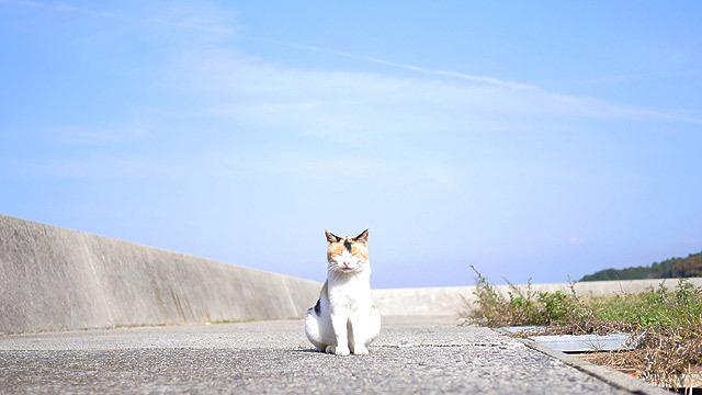 いい猫がいる島、真鍋島。