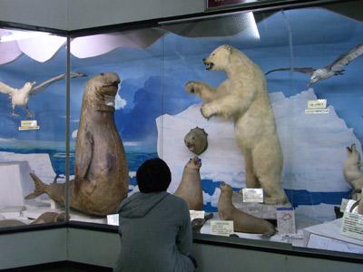 800体の剥製と人間の神秘に触れる博物館