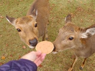 鹿せんべいを食べ比べる