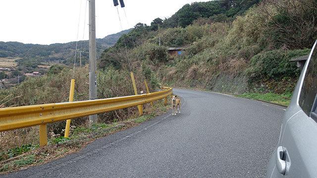 山口で遭遇したのらいぬ。そしてガードレールが黄色いのも山口ならでは。