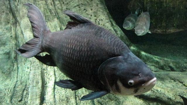 媚びない!ぶれない!淡水魚マニアの聖地、アクア・トトぎふ