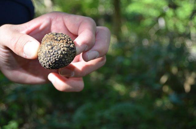 100種類のキノコが野外勉強会で採れた